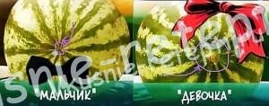 Как определить тип арбуза, выбор арбуза